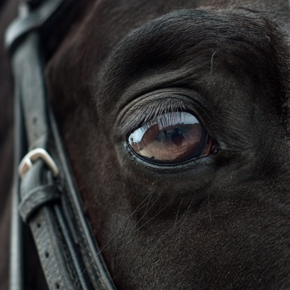 equitation cheval poney